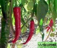 """Перец """"красное пламя""""f1 - pepper """"red flame""""f1"""