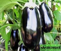 Eggplant ophelia f1 - баклажан офелия f1
