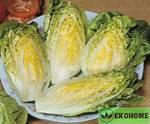Салат маленькая жемчужина - lettuce little gem