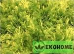 Ковер 100% полиэстер травка, 230 х 160 см