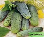"Огурец ""граф гибрид""f1 - cucumber ""earl hybrid""f1"