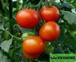 """Томат патио """"фурутика""""f1 - tomato patio """"furutika""""f1"""