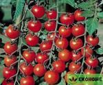 "Томат черри ""ароматная вишня""f1 - tomato cherry ""duftenden kirsch""f1"