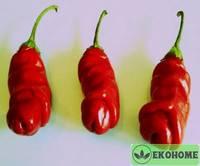 Перец патио чиливилли pepper patio chillywilly