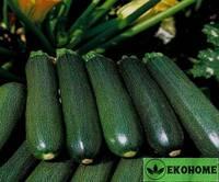 Palermo zucchini f1 - палермский цуккини f1